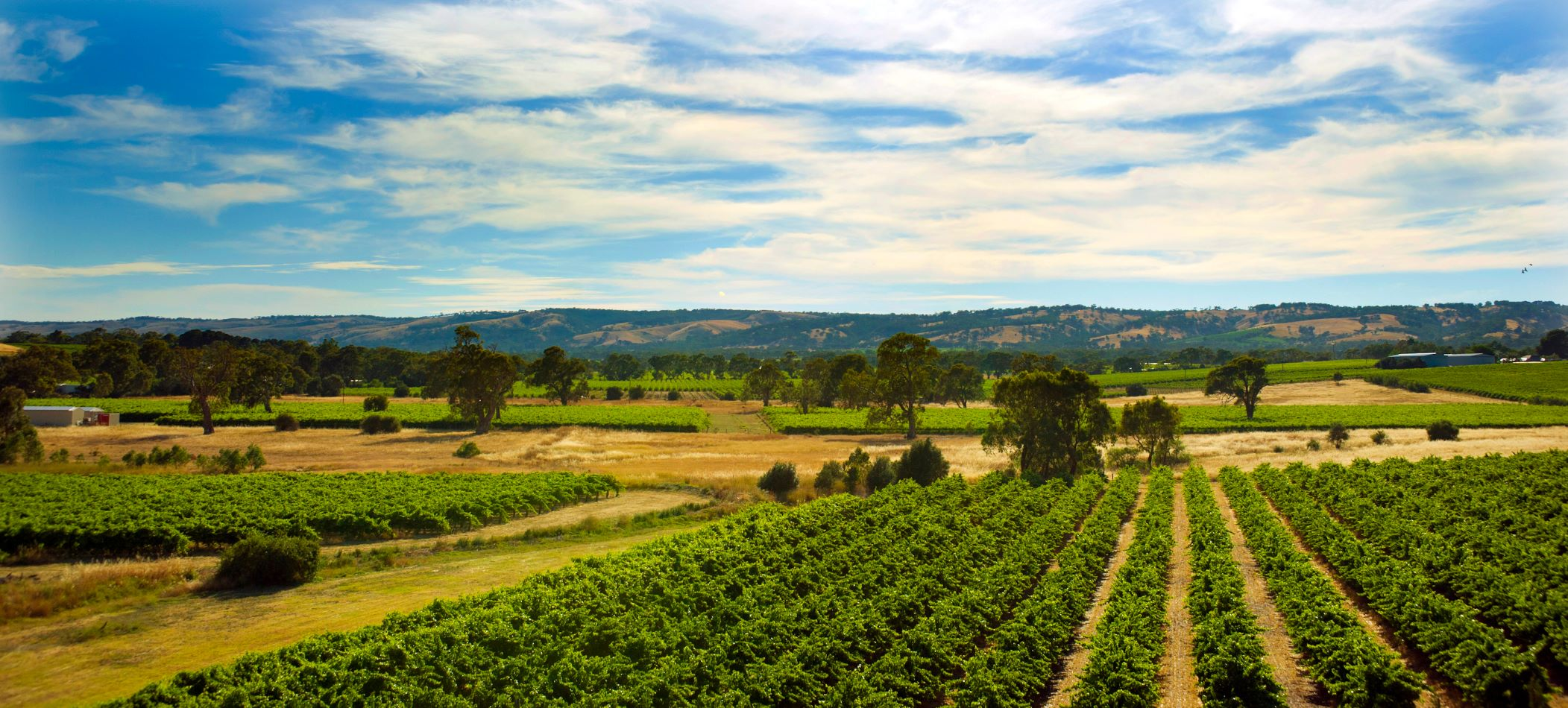 5 McLaren Vale wineries & cellar doors off the beaten track | Alpha Airport Parking